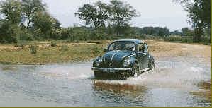 beetlecrossesriver